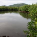 Bayabas_Mindanao_0299_940 (1)