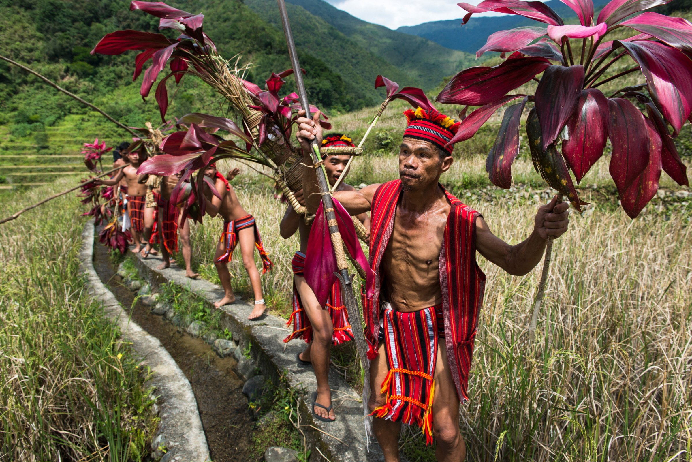 """Every year in the Cordillera mountains of Luzon a ritual is held to celebrate the end of the rice harvest season. Over a two day period, three barangays gather to give thanks and blessings of post harvest with the celebration culminating in a """"punnuk"""" (tug-of-war) which is held in a river flowing through the heritage rice terraces."""