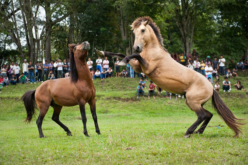 ... jpeg tattoo horses mating pics horses horse breeding site youtube