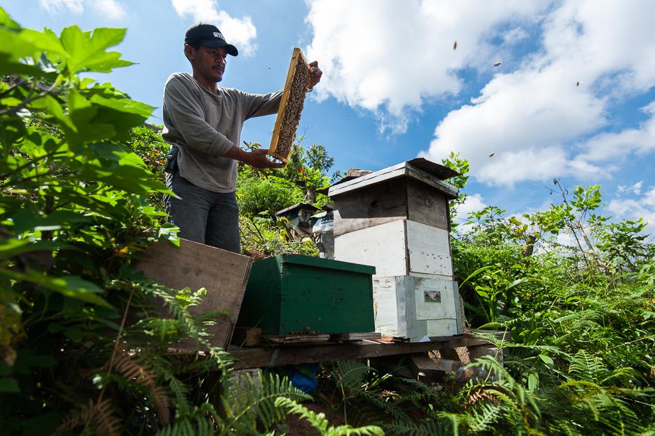 Checking Beehives