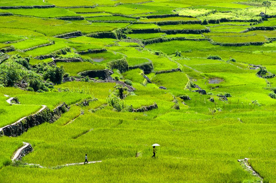 Walking in Rice Terraces