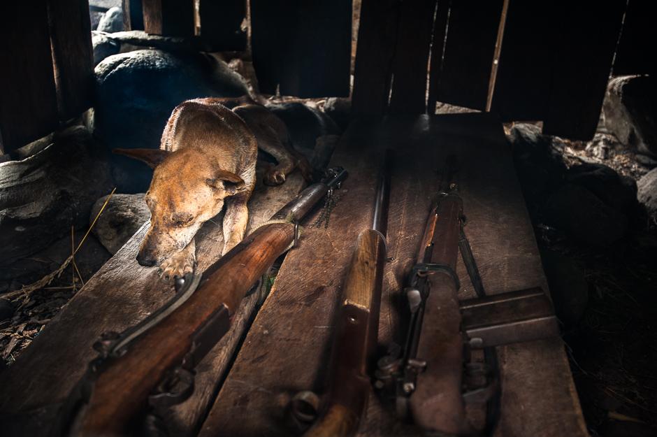 Dog and Guns